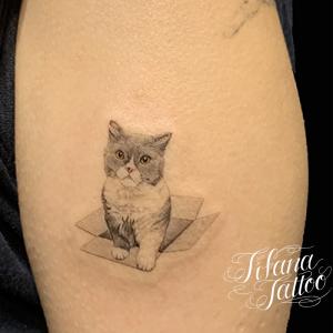 猫のファインライン タトゥー